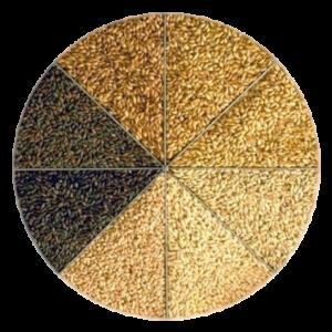 Malta colores granos mosto cerveza color elaboración proceso malteado srm ebc