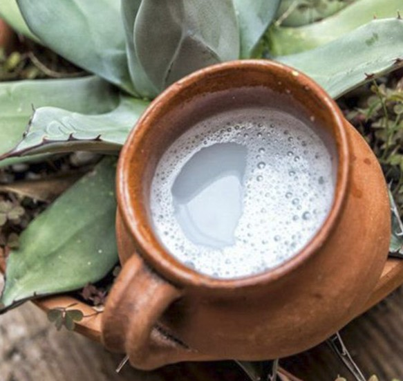 Delicioso pulque tradicional agave blanco cheve chela cerveza cervezálogo